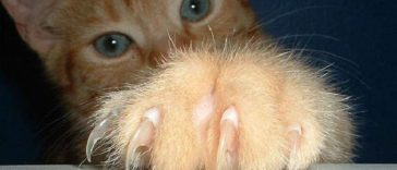 declawing cats banned usa new jersey state 3
